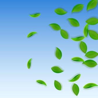 Foglie verdi che cadono. foglie pulite di tè fresco che volano. fogliame di primavera ballando su sfondo blu cielo