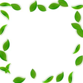 Foglie verdi che cadono. foglie pulite di tè fresco che volano.