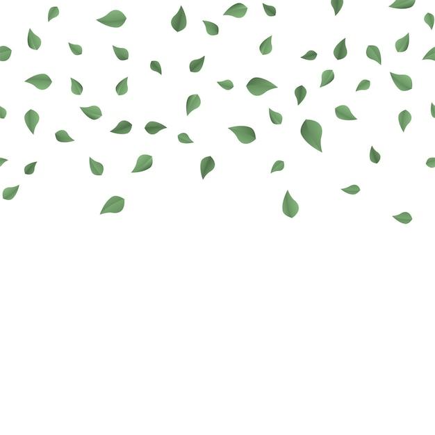 Foglie verdi che cadono su sfondo bianco. vettore