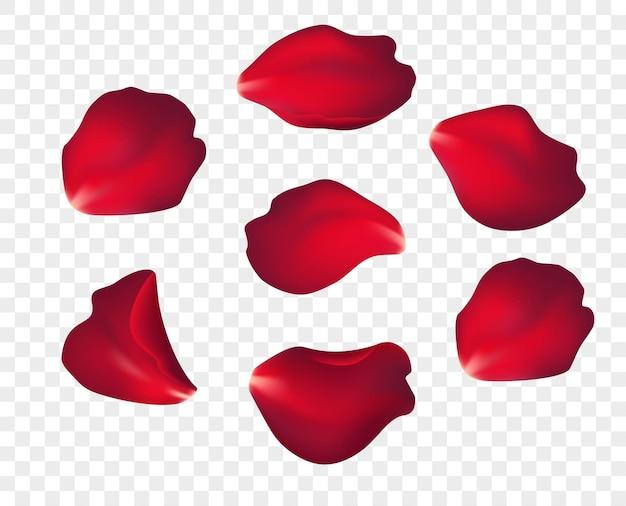 Petali di rosa rossi che cadono isolati su priorità bassa bianca. illustrazione