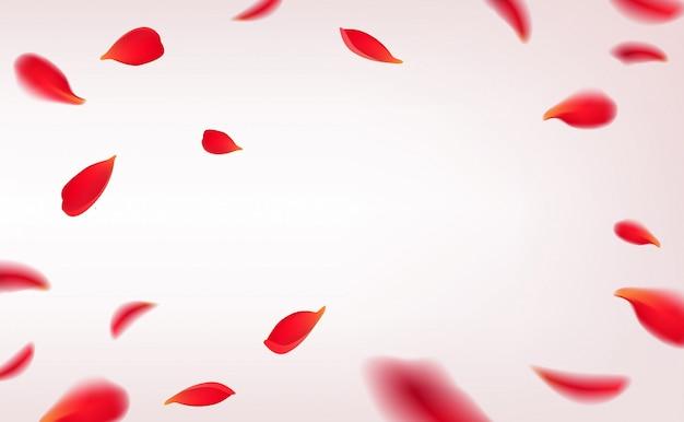 Petali di rosa rossa di caduta isolati su fondo bianco. con cornice di petali di rose di bellezza