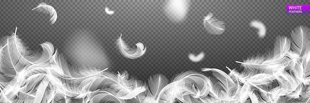 Piume realistiche arrotolate che cadono isolate su uno sfondo trasparente