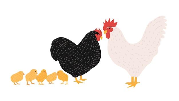 Famiglia di gallo e pollo.