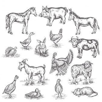 Insieme dell'illustrazione degli animali da allevamento