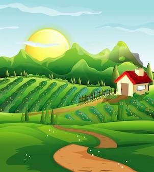 Fattoria nella scena della natura con casetta e fattoria verde