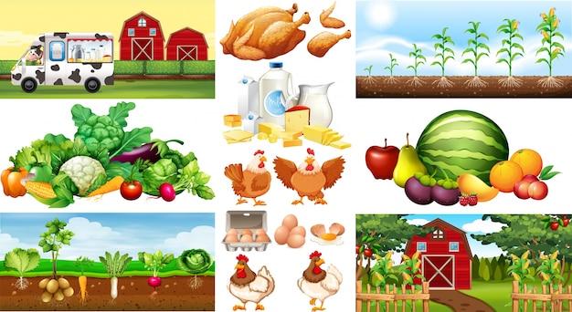Scene di fattoria con verdure e polli