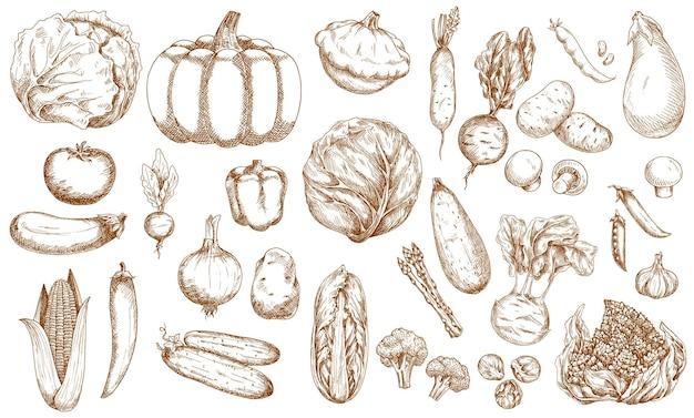 Insieme di schizzi di verdure, vegetazione e verdure di fattoria