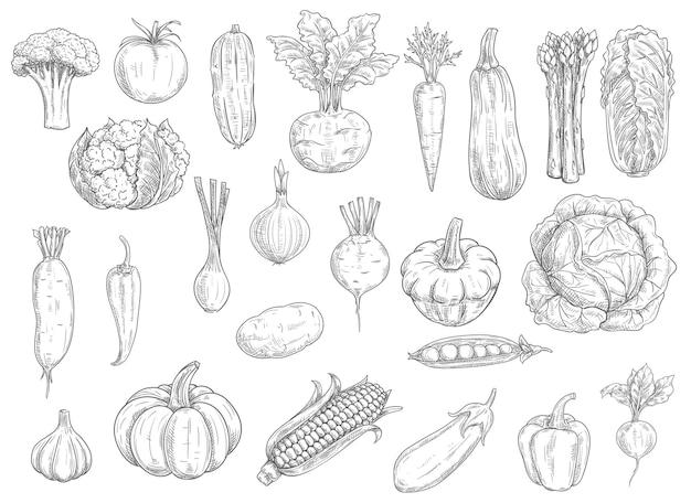 Illustrazione di schizzi di verdure di fattoria