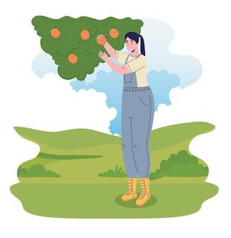 Femmina coltivatore che coltiva arance nell'illustrazione del campo