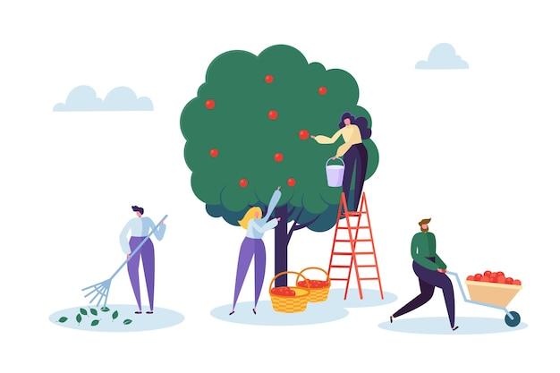Coltivatore donna pick raccolto di meli con scala. carattere che raccoglie frutta organica matura dall'albero naturale verde. illustrazione piana di vettore del fumetto del paesaggio dell'azienda agricola del giardino del paese