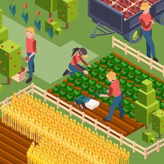 Raccolto degli agricoltori. persone isometriche che lavorano sulla crescita del campo naturale eco cibo irrigazione e lavoratori di vettore di educazione campagna coltivata