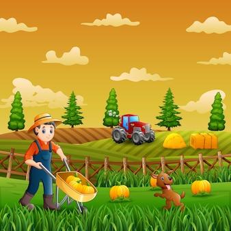 Un contadino che raccoglie le zucche nella fattoria