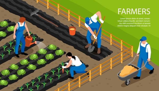 Agricoltori al lavoro che innaffiano i raccolti che coltivano la composizione orizzontale isometrica del suolo che promuovono l'illustrazione sana dei terreni agricoli attivi