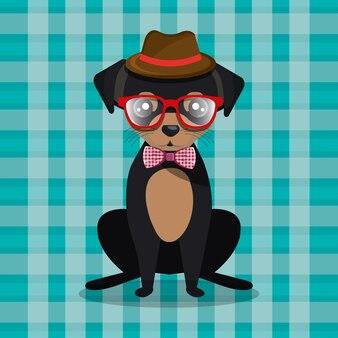 Il cucciolo del cane di modo si siede il fondo a quadretti dell'arco dei vetri del cappello