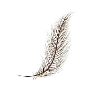 Marrone dell'uccello della piuma su una priorità bassa bianca.