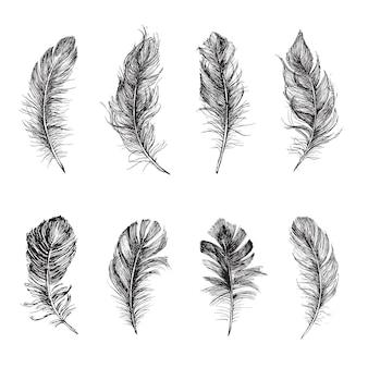 Set di piume illustrazione disegnata a mano