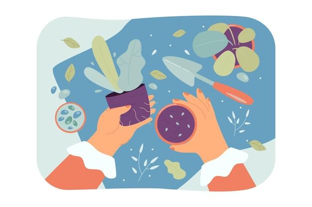 Mani femminili che tengono pianta e vaso con l'illustrazione piana del suolo