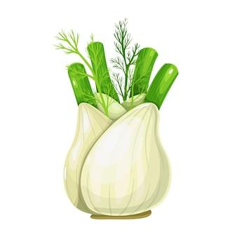 Radice di finocchio. ingrediente di condimento aromatico. erbe e spezie. illustrazione vettoriale isolato in stile cartone animato.