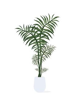 Felce in un vaso bianco. pianta per la casa isolata su fondo bianco.