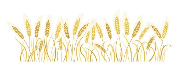 Spighette del grano del fumetto del campo orecchie dell'oro mature, produzione di farina di simbolo agricolo