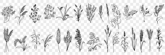 Insieme di doodle di erba e piante di campi