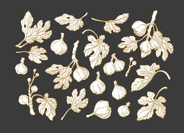 Set di piante di fico
