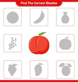 Trova l'ombra corretta. trova e abbina l'ombra corretta di nectarine. gioco educativo per bambini, foglio di lavoro stampabile