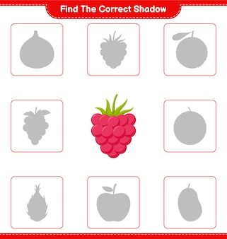 Trova l'ombra corretta. trova e abbina l'ombra corretta dei lamponi. gioco educativo per bambini, foglio di lavoro stampabile
