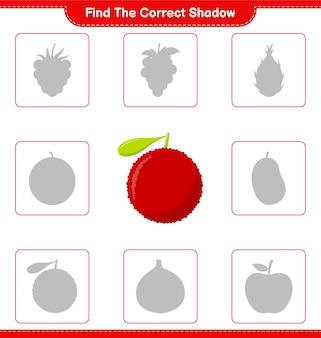Trova l'ombra corretta. trova e abbina l'ombra corretta di yumberry. gioco educativo per bambini, foglio di lavoro stampabile