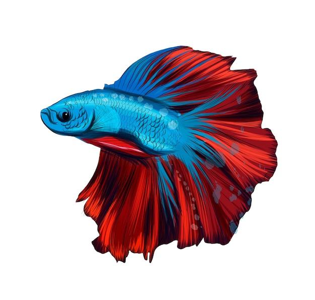 Galletto di pesce galletto di pesce combattente siamese betta da vernici multicolori