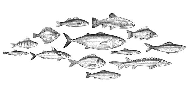 Scuola di pesce. banco di pesci disegnati a mano, ecosistema marino sottomarino, abitanti del mare e del fiume set di vettori in stile vintage inciso. trotto, pesce persico e acciughe, aringhe e sgombri, prelibatezze