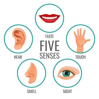 Cinque sensi delle icone dei poster di percezione umana. gustare e ascoltare, toccare e annusare, vedere i sentimenti umani. parti del corpo disposte in cerchi