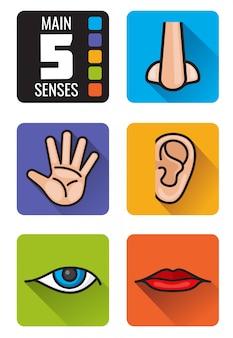 Set di icone di cinque sensi, naso, mano, bocca, occhi e orecchie. l'insieme dei sensi umani odora la vista, l'udito