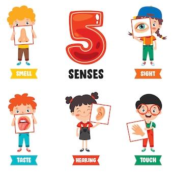 Modello dei cinque sensi con bambini che tengono organi umani
