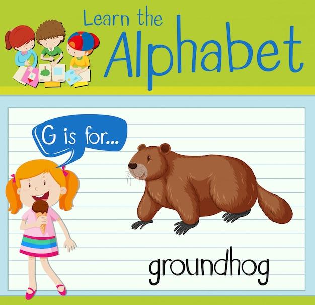 La lettera flashcard g è per marmotta