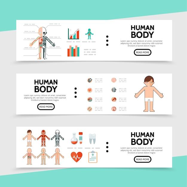 Bandiere orizzontali di anatomia piatta Vettore Premium