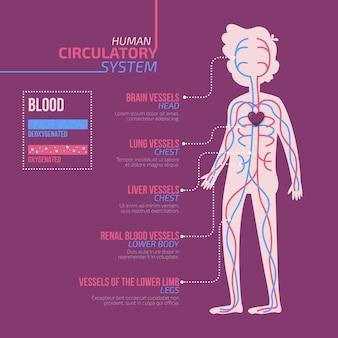 Infografica sistema circolatorio design piatto