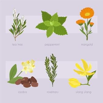 Raccolta di erbe di olio essenziale di disegno a mano piatta