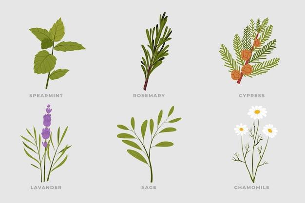 Raccolta di erbe di olio essenziale di disegnare a mano piatta