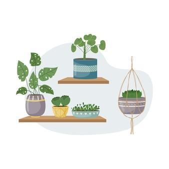 L'illustrazione piatta con i pantaloni della casa in vaso. piantare. piante decorative all'interno della casa. stile piatto.