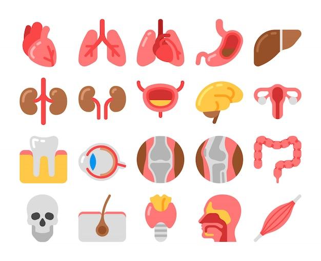 Icone mediche stile piano con organi umani