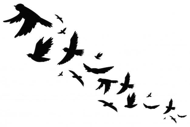 Stormo di uccelli neri silhouette in volo. illustrazione vettoriale isolato