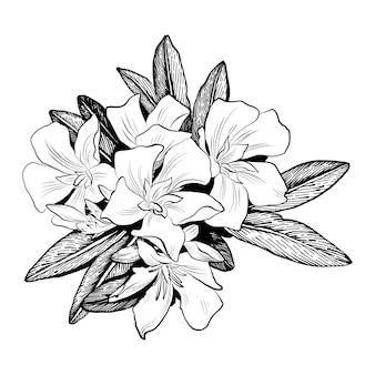 Fiore botanico floreale. illustrazione isolata