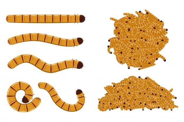 Insieme del fumetto di vettore dei vermi di farina isolato