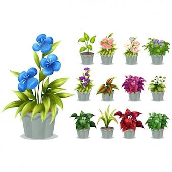 Collezione vasi da fiori