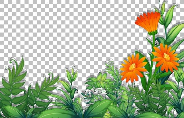 Modello di cornice di foglie di fiori e tropica su sfondo trasparente