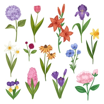 Fiori e invito floreale fiorito dell'invito della cartolina d'auguri per l'illustrazione stabilita di fioritura della molla dell'iride dell'ortensia di compleanno di nozze su fondo bianco