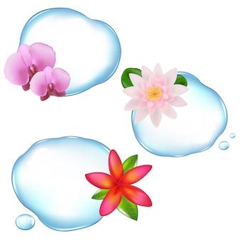 Fiori in acqua