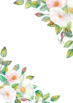Fiori di rosa canina bianchi