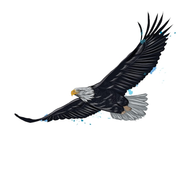 Aquila calva in volo da una spruzzata di acquerello, disegno colorato, realistico.